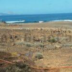 Die Isleta in Las Palmas wurde vom Cabildo mit neuen Pflanzen bestückt