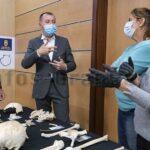 Historischer Fund: 10.000 Knochen von 169 Ureinwohnern aus Guayadeque-Höhle geborgen