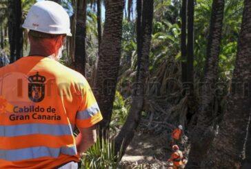 1,25 MIO € für Palmenschutz, dies schützt auch vor Waldbränden!
