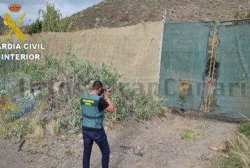 Mehrere Farmen beklaut - Mangos & Avocados waren das Ziel - 3 Festnahmen