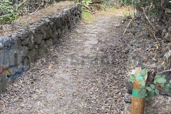 Immer wieder Markierungen auf der Route Tajinaste Azul