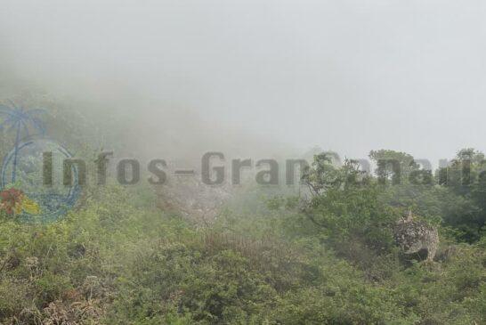 Nebel in Valsequillo (Tajinaste Azul)