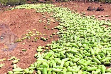 Landwirte warnen: Deutlicher Preisverfall und Rückgang der Nachfrage für frische Produkte