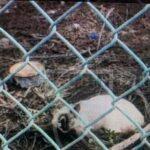 Mal wieder erlitt eine Katzenkolonie in Telde einen Giftanschlag