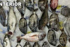 Illegale Unterwasser-Fischerei in Gáldar zur Anzeige gebracht