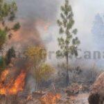 Waldbrand in Mogán ausgebrochen aber bereits stabilisiert