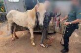 3 Festnahmen wegen Tierquälerei in Valleseco & Firgas