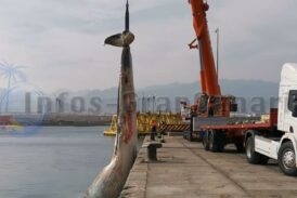 Toter Wal bei Ojos de Garza entdeckt und geborgen